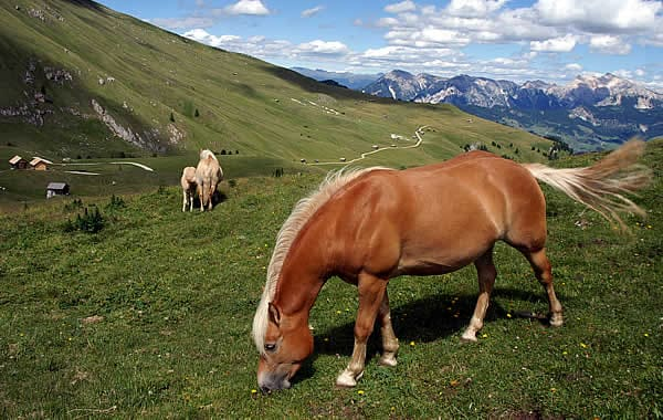 Horse riding in the Dolomites